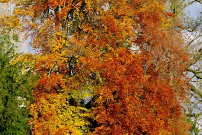 Herbst geniessen