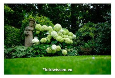 Garten fotografieren ganz einfach